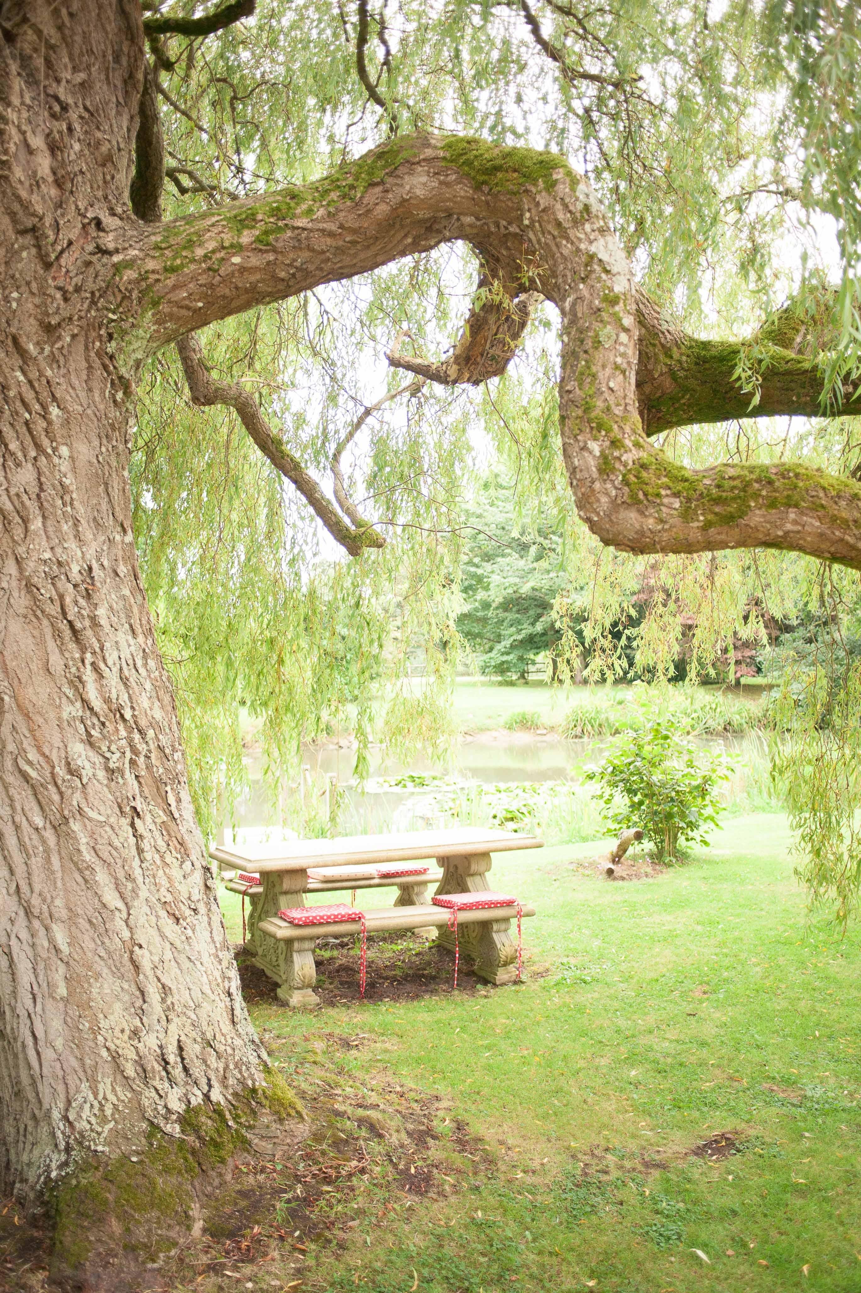 liz_baker_photography_living_tree_limbury_lowres-3-of-33