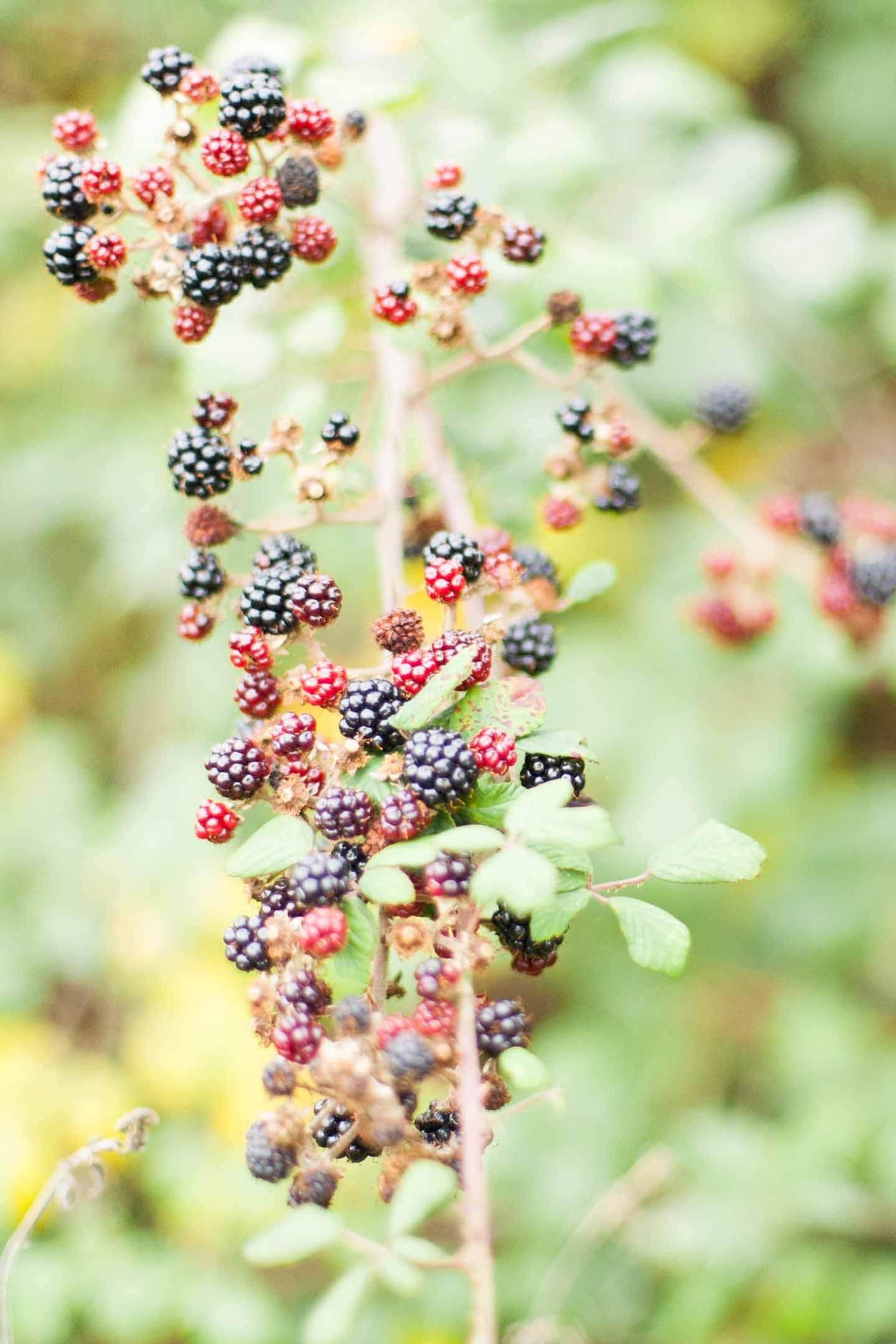 autumn_walk_somerset_liz_baker_photography-5-of-5